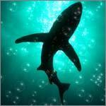 рыба в покере акулы покер